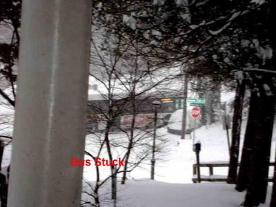 Snow-Jan-2010