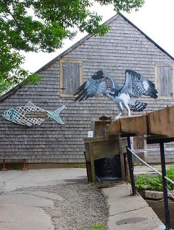 17.06.22 Fish Ladder at Damariscotta Mills