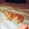 Socrates I - 1977 (Spring) - Approximately 7 weeks old - Flushing, Queens apartment - New York City, NY