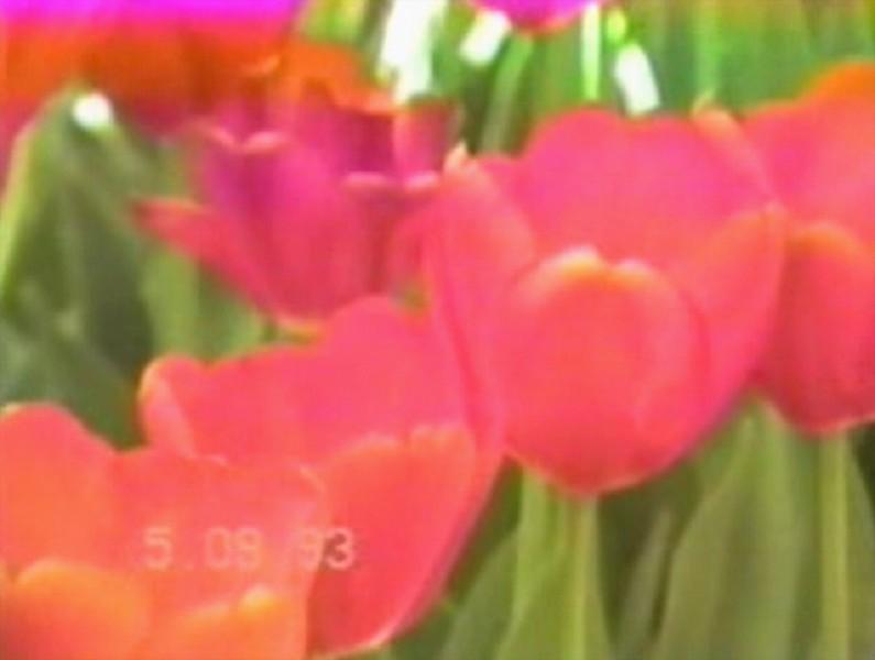 Yaden Time Warp 1993:  Visit to Kingwood Center