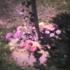 Video Archive Cip 1982 (7) - Yaden, Matthew J. - Matthew's 1st Birthday - July 3, 1982 - Queen Avenue House - Yakima, WA - Danny (Age 4) - 8mm Series (3 min 48 sec)