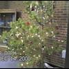 Video Archive Clip 2000 (Dec) - Yaden, Steven R. - Age 12 - Steven plays cello in the Christmas strings concert - Bob Kreutz, Orchestra Director - Walt Clark Middle School Auditorium - Loveland, CO - Original VHS Series (10 min 34 sec)