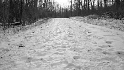 Bridle Trail Hill, Hinckley Reservation, Christmas Eve Trail Run, 2009.
