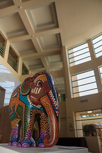 20130925_DPElephants_0089T