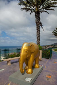 20130925_DPElephants_0028T
