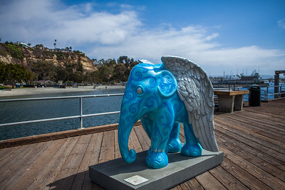 20130925_DPElephants_0077T
