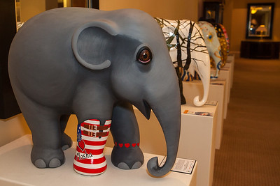 20130925_DPElephants_0017T