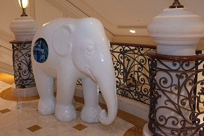 20130925_DPElephants_0022T