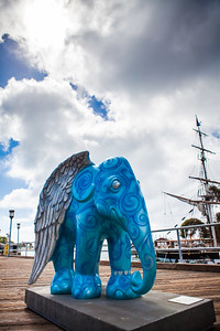 20130925_DPElephants_0075T