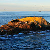 BigRock Dana Point Original PIC 12-15-13