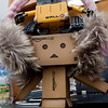 danbo: i wonder what we can do with these ear muffs