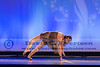 Dance America National Finals Chicago - 2013-7641