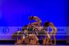 Dance America Nationals Finals Schaumburg, IL - 2013 - DCEIMG-7970
