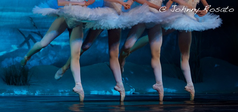 swan lake - linearCIak - milano 2016