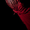 VelvetHearts_RedLightGirly-15
