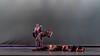 160716_Thodos Dance__D4S5591-362