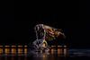 181128_2018 CSUF Fall Dance_D4S0663-165