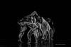 190501_CSUF 2019 Spring Dance_D4S5675-115
