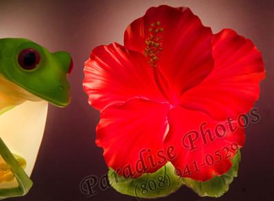 Hibiscus light rw 042912 6589