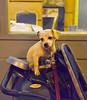 Dog on stroler Chinatown 011912 1417