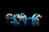 20091206 Gaspard and Dancers - 1 'Anemone' (6358nn, 227p, c2009 Dilip Barman)
