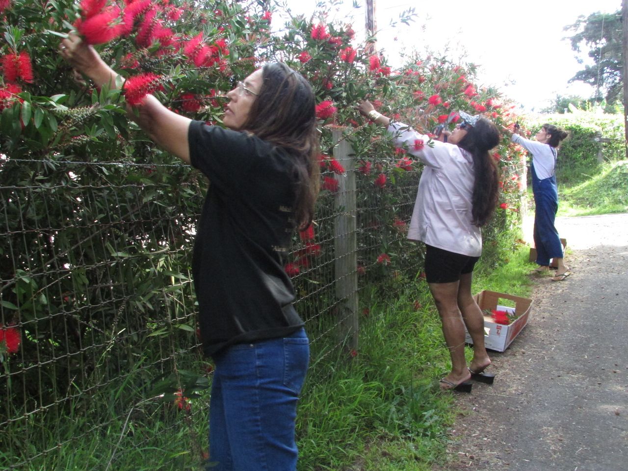 Gathering flowers for adornment in Kula. <br /> (Momi)