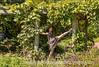 Quinn Under the Grape Arbor