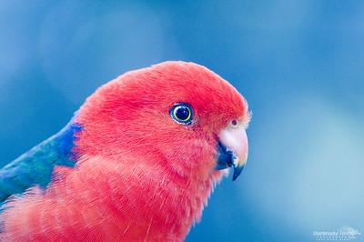 Bird011