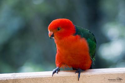 Bird001