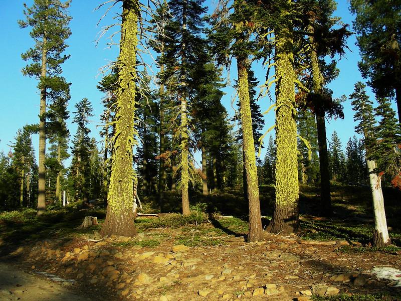 Evening hike West side of Loomis Peak | May 23, 2009