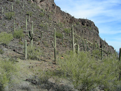 Hiking the Calloway Trail | E Picacho Peak State Park | Picacho, Arizona | 2/2/2010