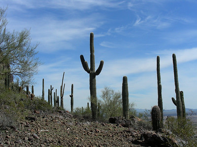 Hiking the Calloway Trail | SE Picacho Peak State Park | Picacho, Arizona | 2/2/2010