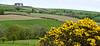 Obdivujeme Hlodáš európsky nad dedinkou Leaholm