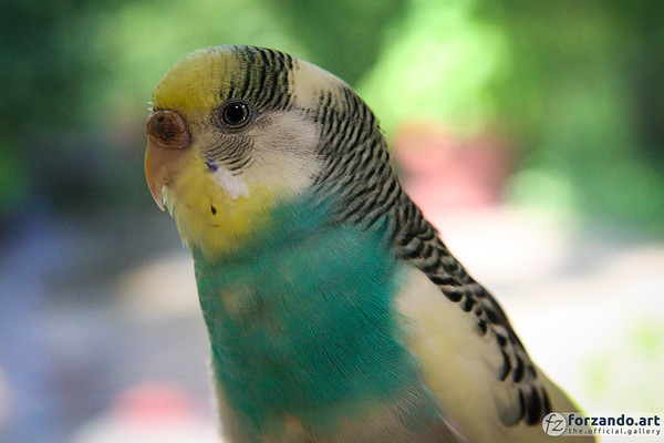 Fine Feathered Friend