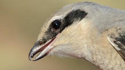 Photoblog 2 Danish Birds, Bugs and Beaches