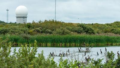 August. - Skarvesøen på Grenen - The Cormorants' Lake at Grenen