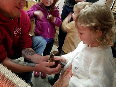 A Lost Coast Hay employee lets children pet a duckling on Sunday. (Photo by Ann Farley - Contributed)