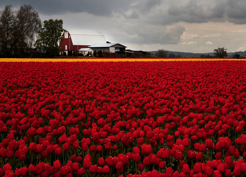 Tulip Barn