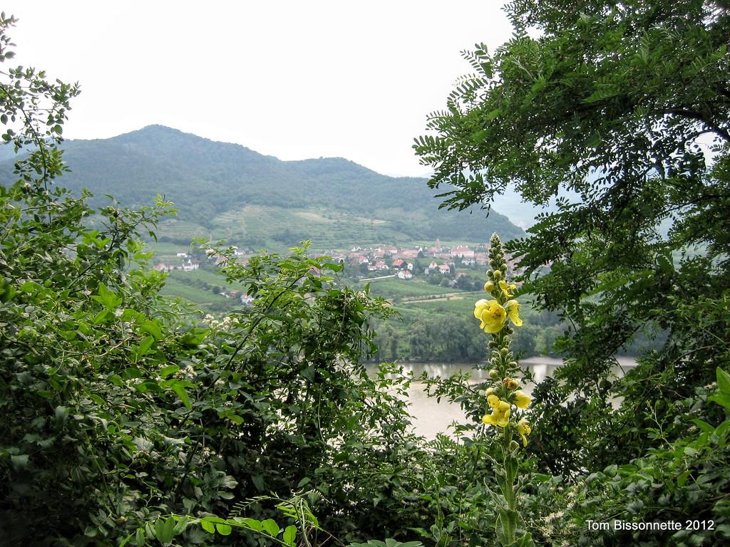 Danube Countryside.