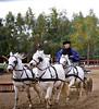 Tiny Horse Team, II, Puzsta, Budapest, Hungary