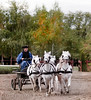 Tiny Horse Team, I, Puzsta, Budapest, Hungary