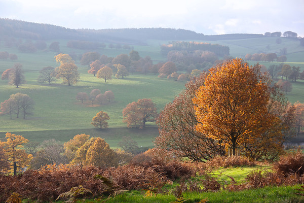 Derbyshire in the fall