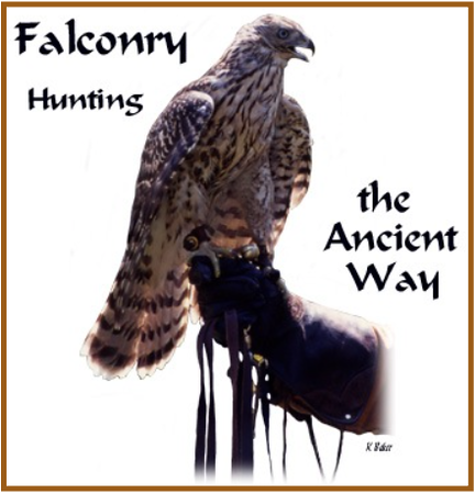 Falconry, an ancient hunting form