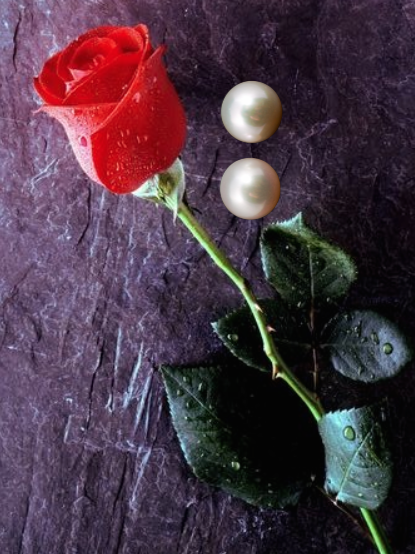 one rose, two pearls