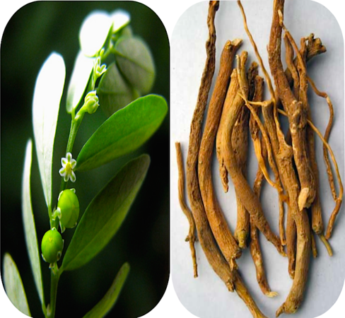 Indian herbs & roots for medicine