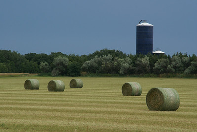Baled wheat straw along Paradise Creek