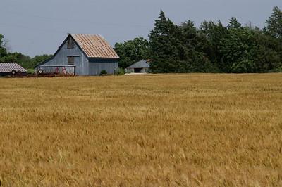 Barn and wheat field near Smolan
