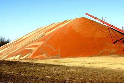 Grain on the ground at the Palmer COOP elevator