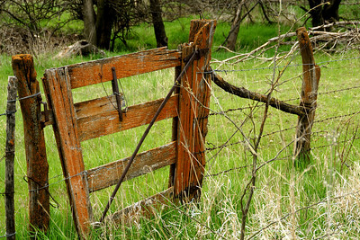 Wood fence gate - western Washington County