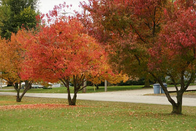 Fall foliage in Lancaster